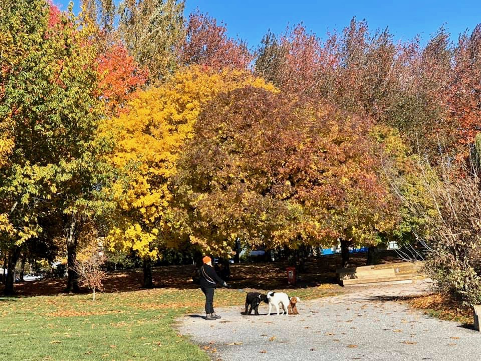 5 Lovely Parks To Visit With or Without Covid-19